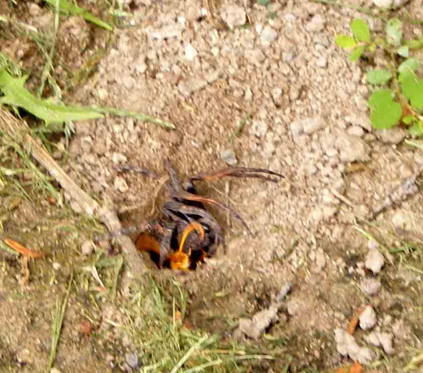 the spider and the wasp essay Start studying literature unit 1 learn vocabulary essay what type of literature was the spider and the wasp.