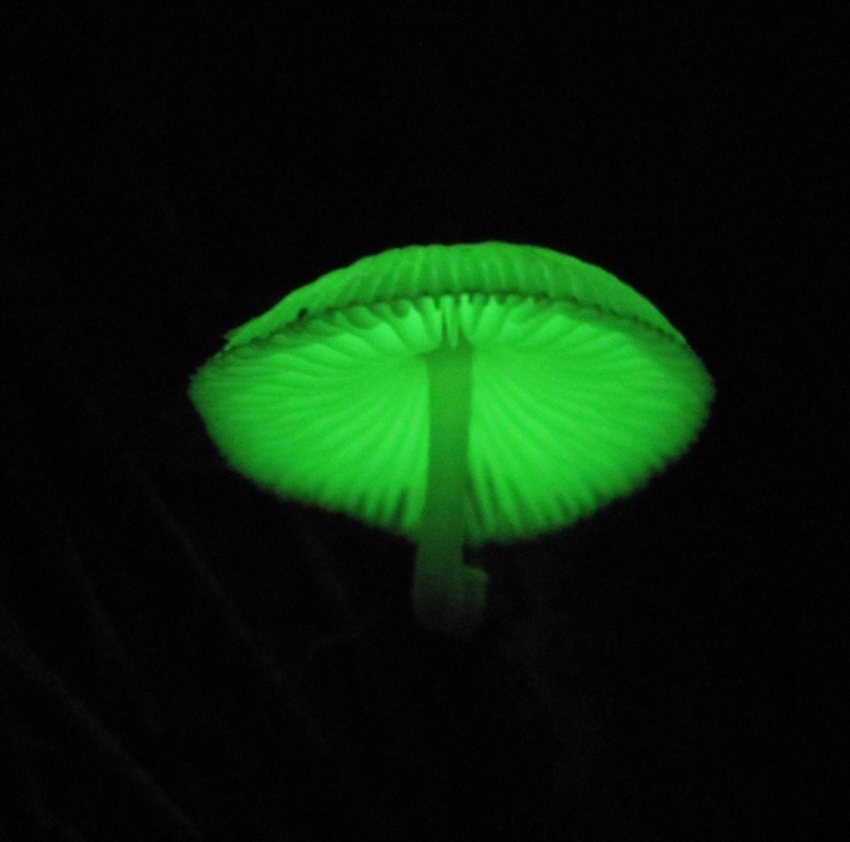 bioluminescence research paper