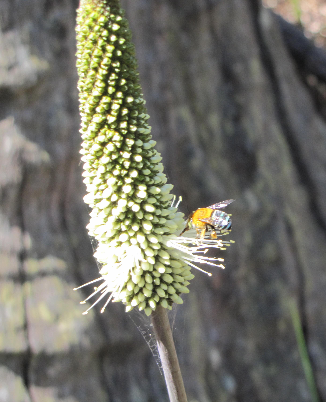 1000 Bee Web Links