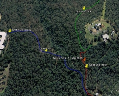 Noisy Pitta - Google Earth - 11 Mar 2013