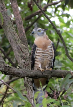Pacific Bazza - 4 Mar 13