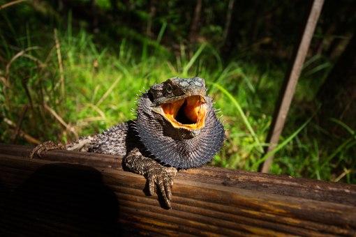 Bearded Dragon - Mar 2013 - Alan Moore