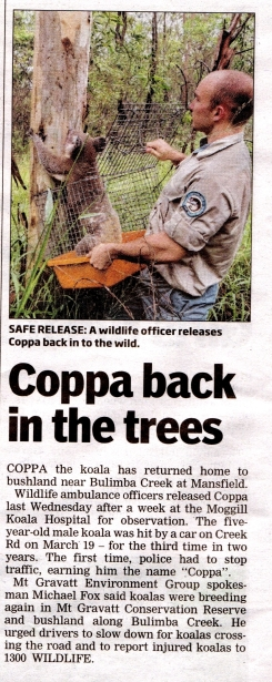 Coppa back in the trees - 10 Apr 2013