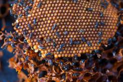 Stingless bee hive (low) - 11 Aug 2013