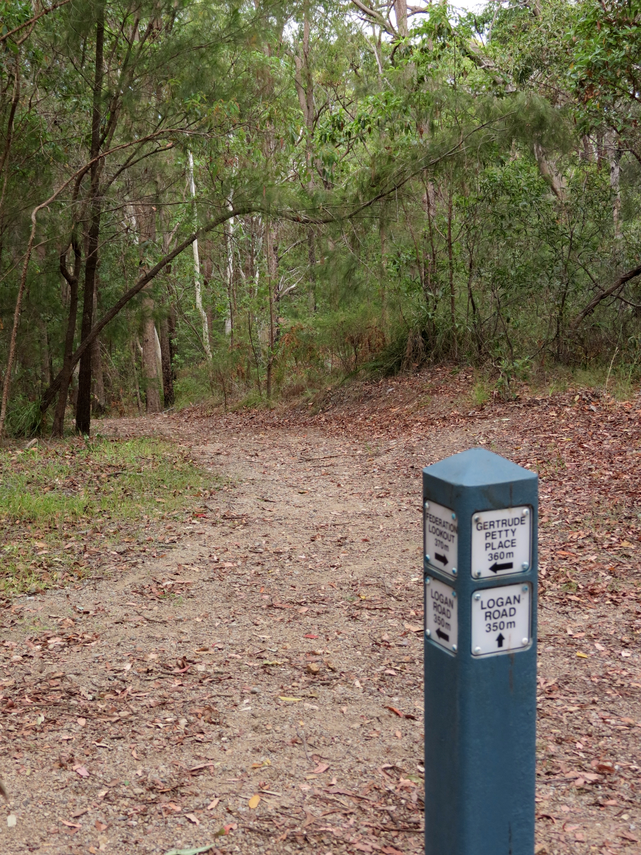 Ironbark Track junction - 10 Feb 2014