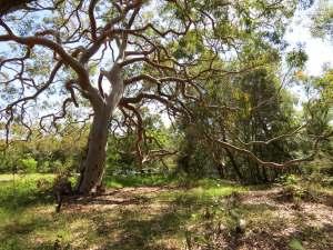 Clive Park - tree - 2 April 2013