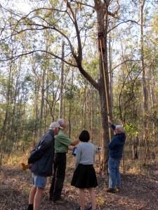 Nest box monitoring - 3 Sept 2014