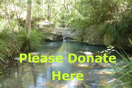 Bulimba Creek Environment Fund