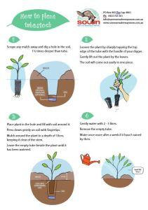 How to plant tubestock