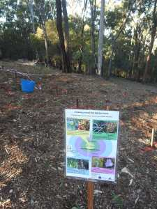 Small bird planting - sign - 13 July 2015