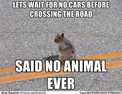 said no animal ever