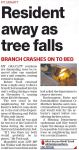 Tree falls – Southern Star – 18 Nov 2015