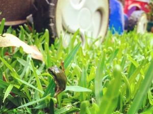 Frog and mower