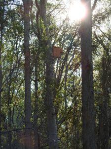 Kookaburra box - Fox Gully Bushcare Phase 2 - 7 July 2016