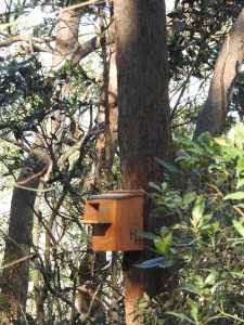 Kookaburra box - Geebung Track - 7 July 2016 lowres