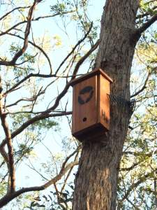 Micro-bat box - Geebung Track - 7 July 2016 lowres