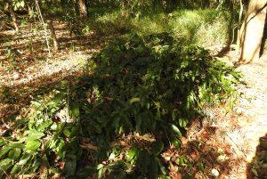 compost-pile-29-nov-2016
