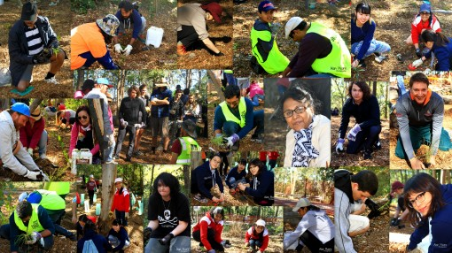 Planting - National Tree Day 2017 - 30 July 2017