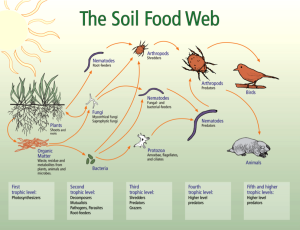 LIFE IN THE SOIL A PERSPECTIVE TO HEALTHY FARMING