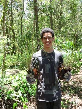 Planting - Kangaroo Grass - Themeda triandra - 7 Dec 2017 lowres