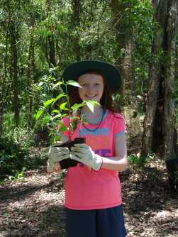 Planting - Poison Peach - Trema tomentosa - 7 Dec 2017 lowres