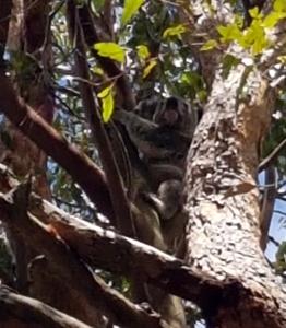 koala - outlook drive2 - 5 jan 2019