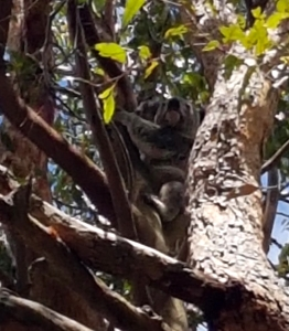 koala - outlook drive2 - 5 jan 2019