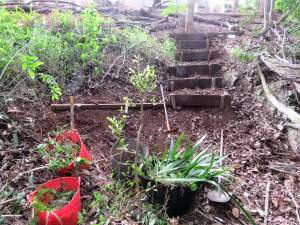Steps to gully - 11 April 2019