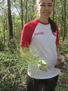 Guinea Grass seed heads - 11 May 2019